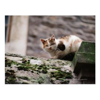 Cat crouching on rock wall postcard