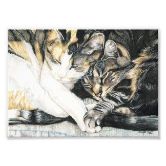 Cat Cuddle Art Print Photo