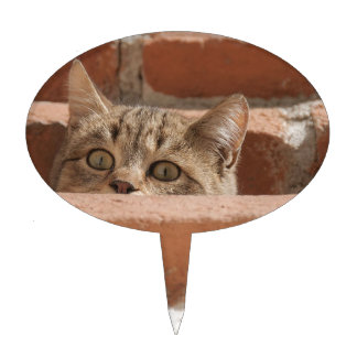Cat Curious Young Cat Cat's Eyes Attention Wildcat Cake Topper