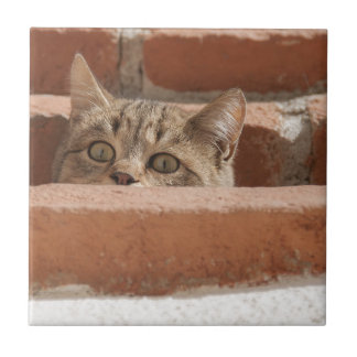 Cat Curious Young Cat Cat's Eyes Attention Wildcat Ceramic Tile