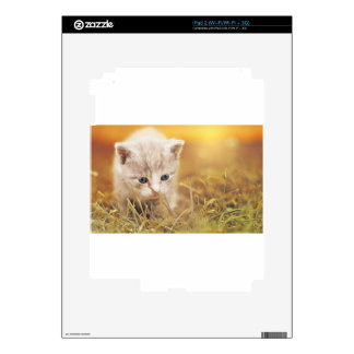 Cat Cute Cat Baby Kitten Pet Animal Charming iPad 2 Decal