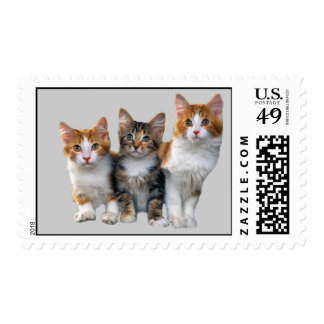 Cat Cute Kitties Postage Stamp