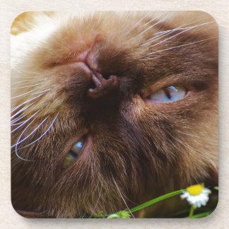cat cute pet purr meow eyes face macro close grace coaster
