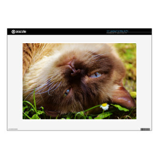 cat cute pet purr meow eyes face macro close grace decal for laptop
