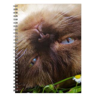 cat cute pet purr meow eyes face macro close grace notebook