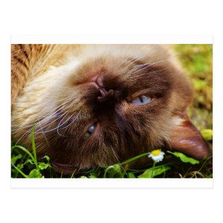 cat cute pet purr meow eyes face macro close grace postcard