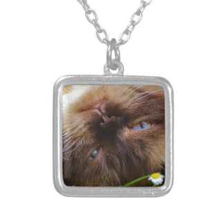 cat cute pet purr meow eyes face macro close grace silver plated necklace