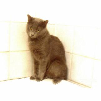 Cat Cutout