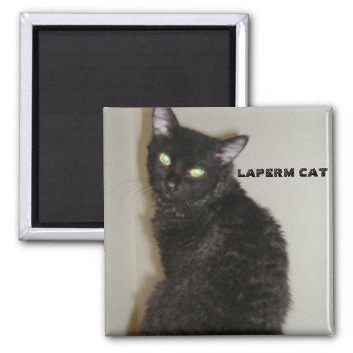 CAT DE LAPERM IMÁN CUADRADO