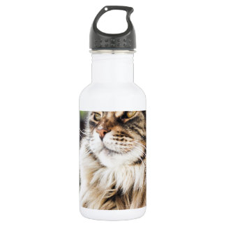 Cat deep in thought water bottle