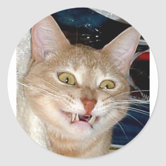 CAT DENTUDO PEGATINA REDONDA