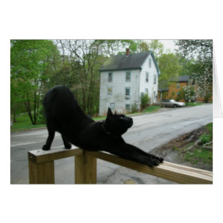 Cat Doing Morning Yoga Greeting Card