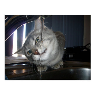 Cat_Dosnt_Like_Water,_ Postcard