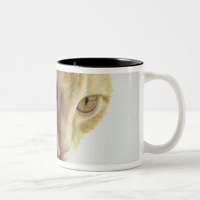 Cat drinking milk Two-Tone coffee mug