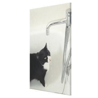 Cat Drinking Water Dripping From A Tap Canvas Print