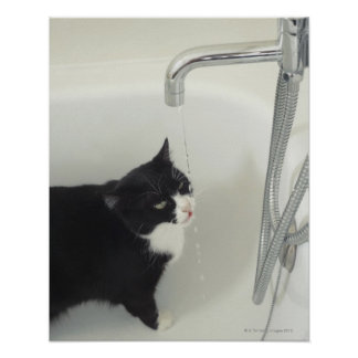 Cat Drinking Water Dripping From A Tap Poster