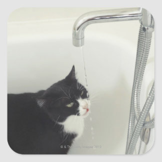 Cat Drinking Water Dripping From A Tap Square Sticker