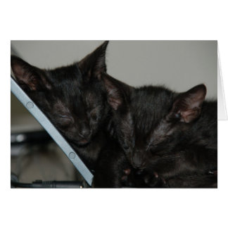 Cat Dubai - Laptop Kittens Card
