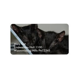 Cat Dubai - Laptop Kittens Label