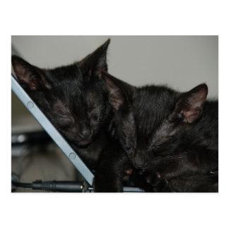 Cat Dubai - Laptop Kittens Postcard