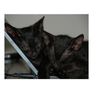 Cat Dubai - Laptop Kittens Poster