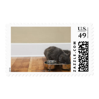 Cat eating from bowl postage