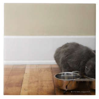 Cat eating from bowl tile