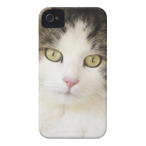 CAT ELECTRONIC DEVICES CUBIERTA iPhone 4 PROTECTORES