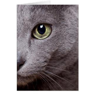 Cat Eye Card