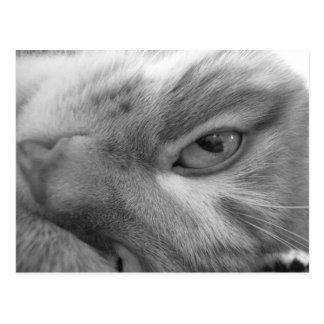 Cat Eye Close Up Postcard