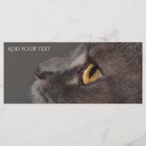 Cat Eye-Macro by Shirley Taylor