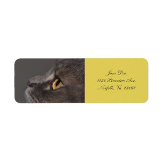 Cat Eye-Macro by Shirley Taylor Label