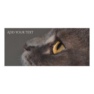 Cat Eye-Macro by Shirley Taylor Rack Card
