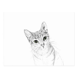Cat Eyes A Pencil Drawing Postcard