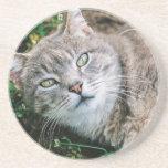Cat Eyes Beverage Coaster
