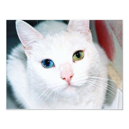 Cat Eyes Card