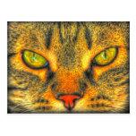 Cat Eyes.jpg Post Cards