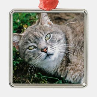 Cat Eyes Metal Ornament