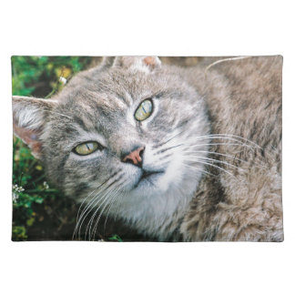 Cat Eyes Placemats