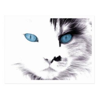 Cat Eyes Postcards