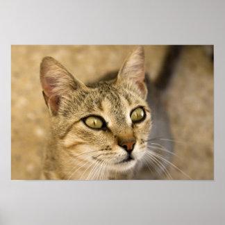 Cat eyes print