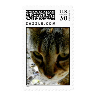 Cat eyes stare postage