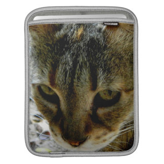 Cat eyes stare sleeve for iPads