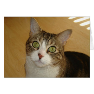 Cat Eyes Stationery Note Card