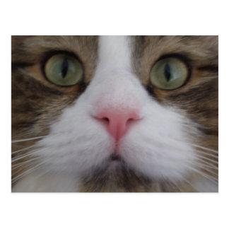 Cat Face on Postcard