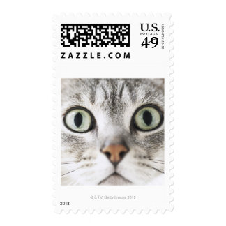 Cat face postage stamps