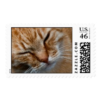 Cat face postage stamp