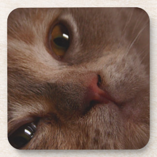 Cat - Face to Face Coaster