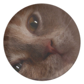 Cat - Face to Face Plate