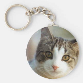 cat-facts keychain